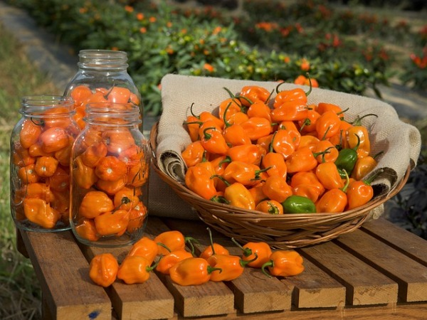 habanero-peppers-109133_640