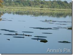 anna 025