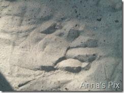 anna 029