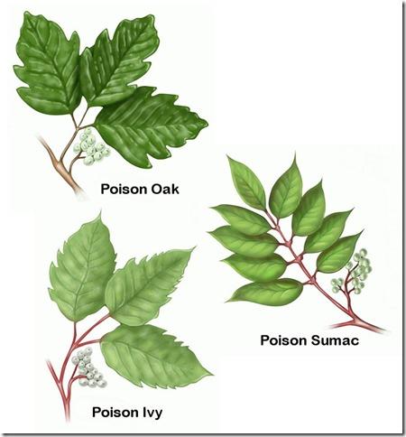 Poison_Oak_Ivy_Sumac