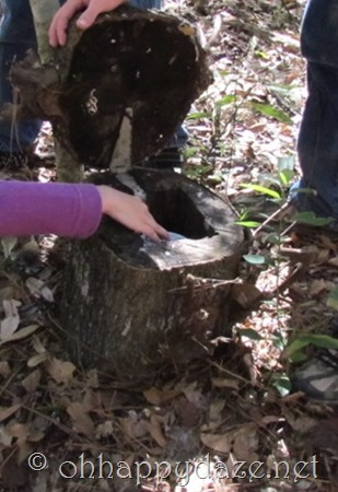 Geocaching The Stump