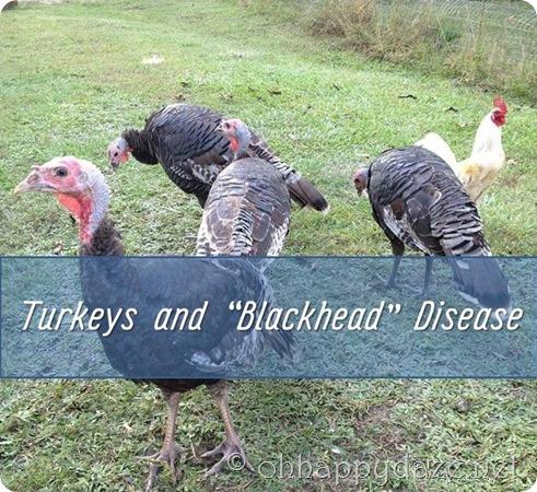 Turkeys and Backhead Disease