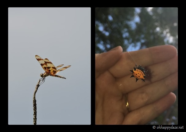 New Phototastic Collage3